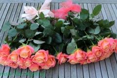 Koralļu krāsas rozes - apsveikuma pušķi vecākiem.