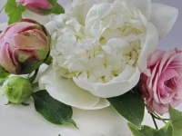 Kāzu torte rozā un baltos toņos