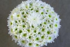 Netradicionāls līgavas diska formas pušķis no baltiem ziediem